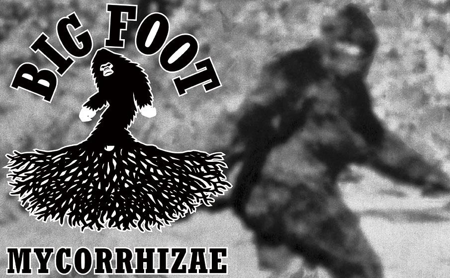 Big Foot Mycorrhizae