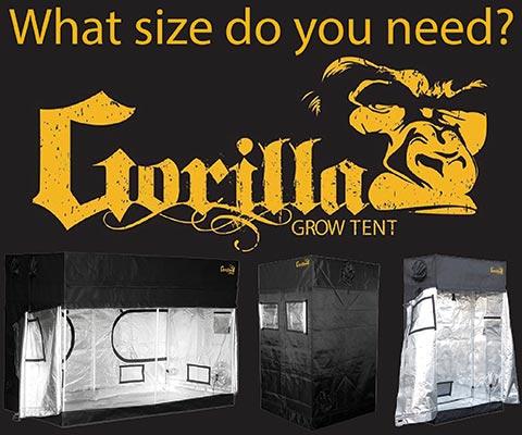 Gorilla Tent